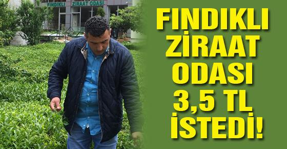 FINDIKLI ZİRAAT ODASI 3,5 TL İSTEDİ!