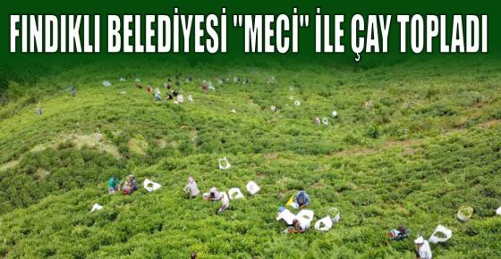 """FINDIKLI BELEDİYESİ """"MECİ"""" İLE ÇAY TOPLADI"""